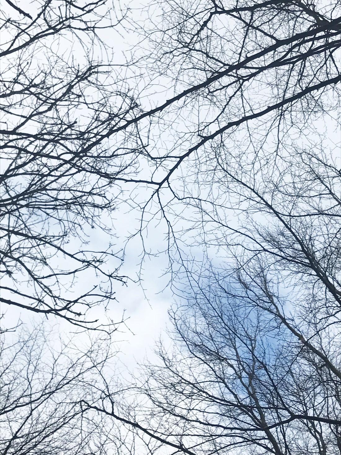 Frie tanker i skoven