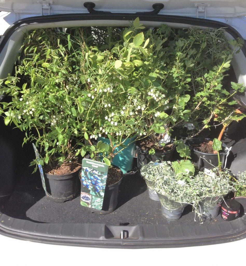 Bil fuld af planter